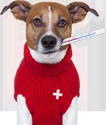 chien malade lausanne suisse